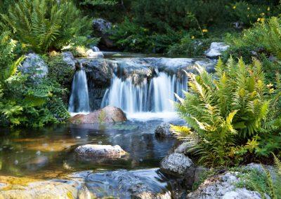 Atlanta Water Garden 10