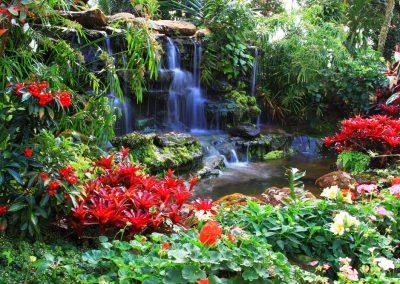Atlanta Water Garden 11
