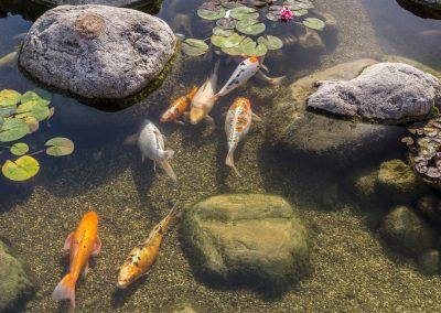 Atlanta Water Garden 22
