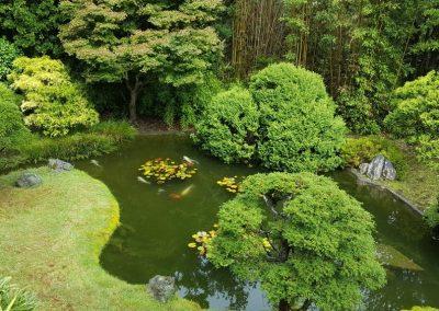 Atlanta Water Garden 25