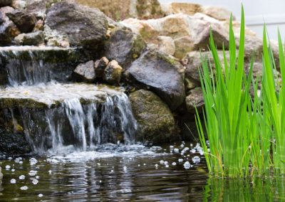 Atlanta Water Garden 26