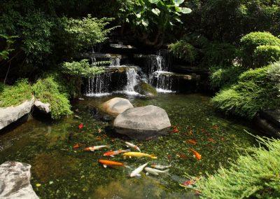 Atlanta Water Garden 32