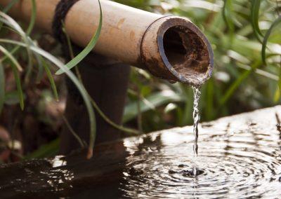 Atlanta Water Garden 37