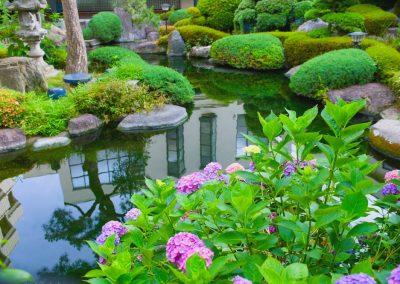 Atlanta Water Garden 40